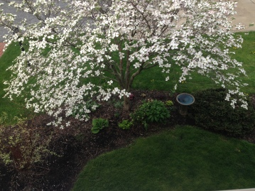 side garden from above.JPG